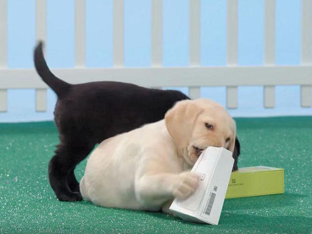 verizon-puppy-unboxing-lg-g5